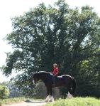 De persoon op dit paard is gewoon 1,70m o.i.d.