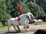 Paarden spektakel