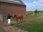 Paarden!!!